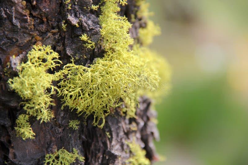 Muschio verde sul circuito di collegamento di albero fotografia stock libera da diritti