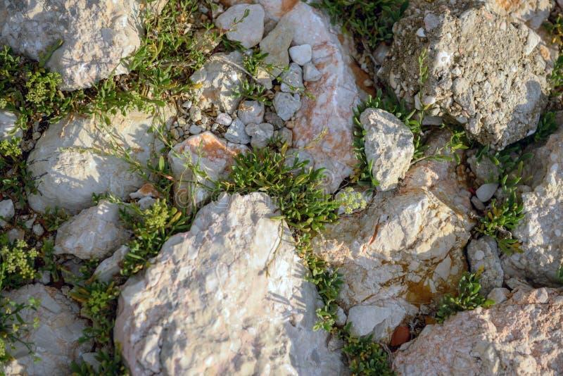 Download Muschio Verde Sul Circuito Di Collegamento Di Albero Immagine Stock - Immagine di ambiente, seme: 55351195