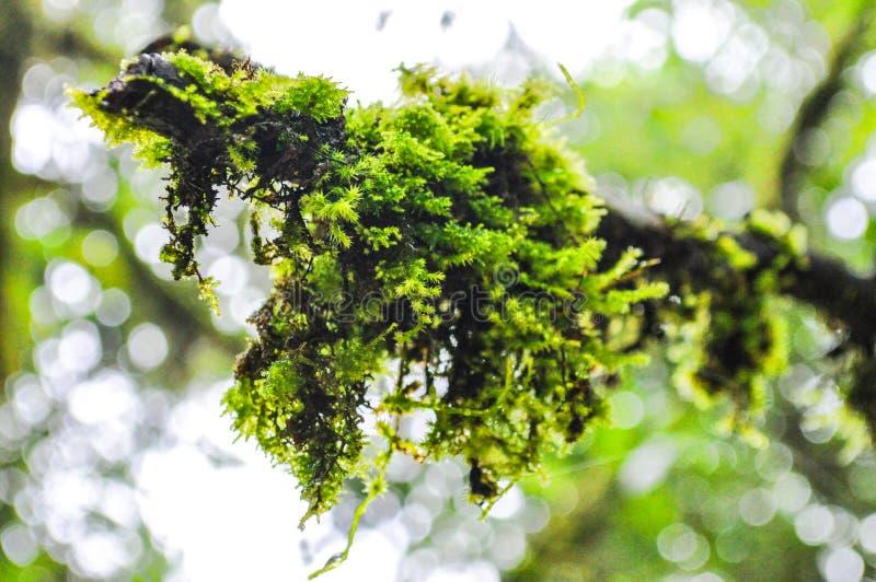 Muschio verde sul fondo defocused del bokeh immagini stock