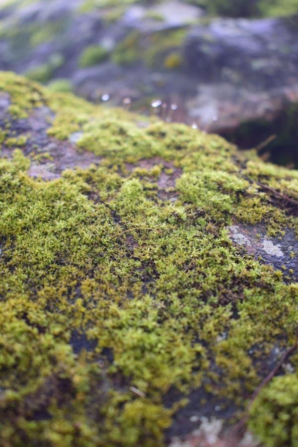 Muschio verde sulla superficie della roccia in una giungla immagine stock libera da diritti