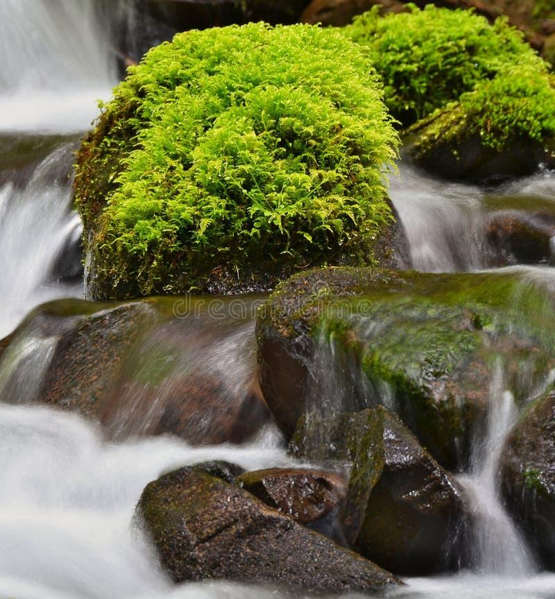 Muschio verde sulle rocce bagnate fotografia stock libera da diritti