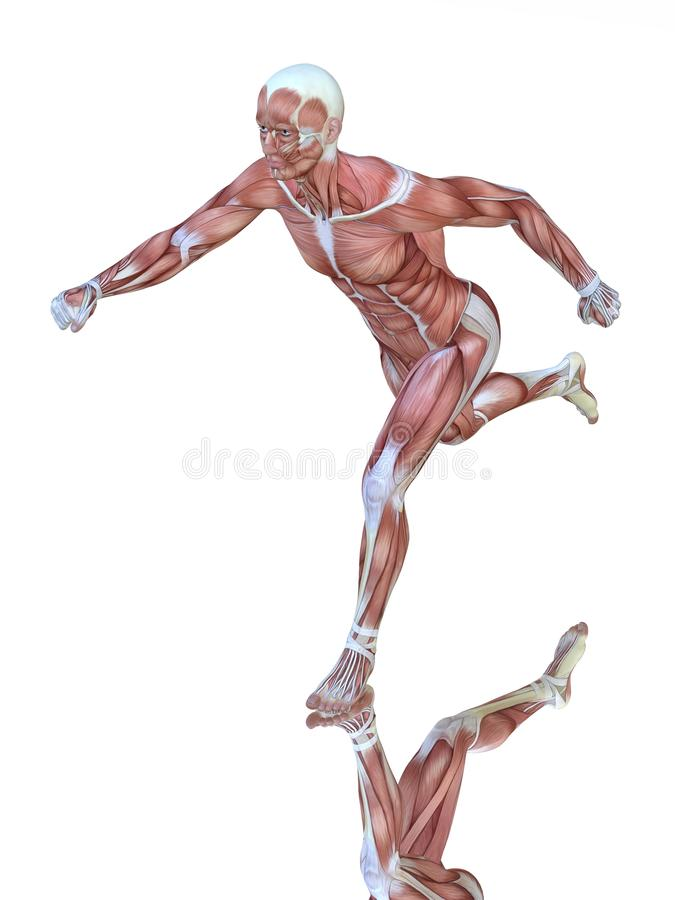 Muscle Anatomy Of Running Man Stock Photography