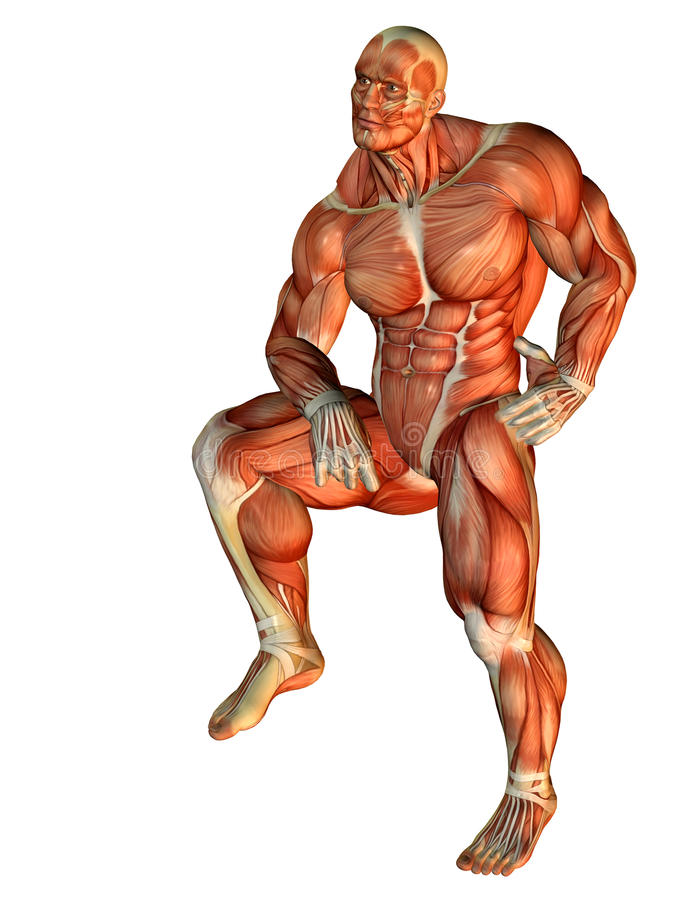 Download Muscle Body Builder Standing On One Leg Stock Illustration - Image: 15751706