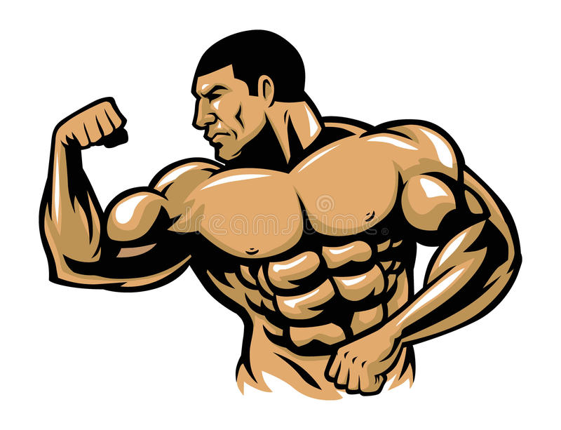 Muscle bodybuilder posing. Vector of muscle bodybuilder posing vector illustration