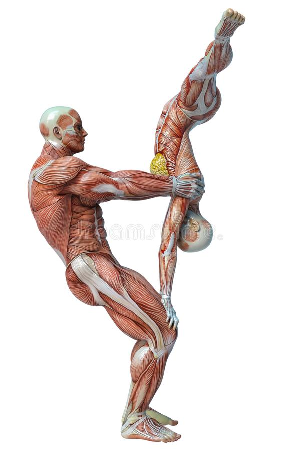Old Fashioned Yoga And Anatomy Image Collection - Anatomy Ideas ...