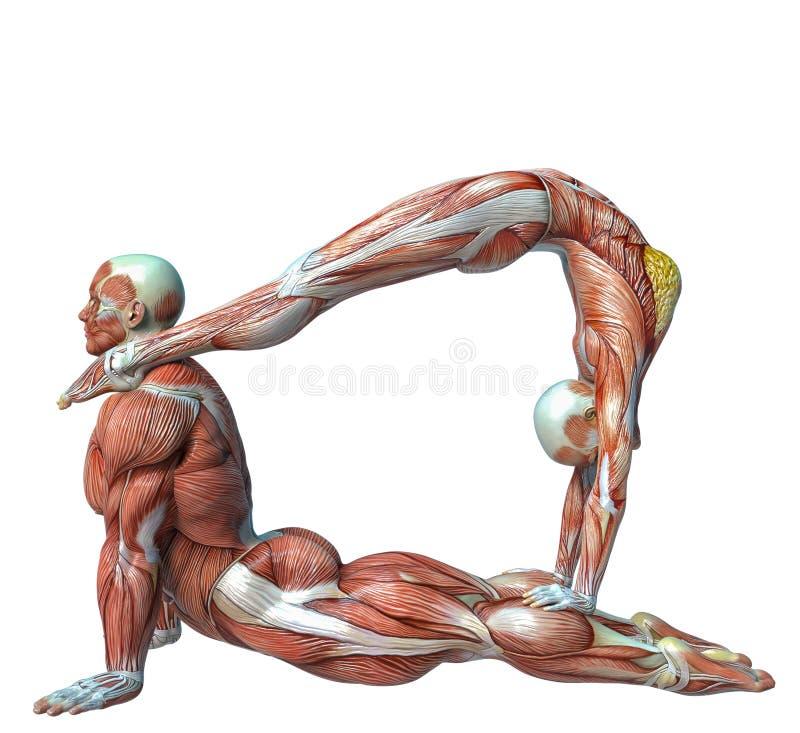 Ungewöhnlich Anatomie Trainiert Dvd Herunterladen Bilder - Anatomie ...