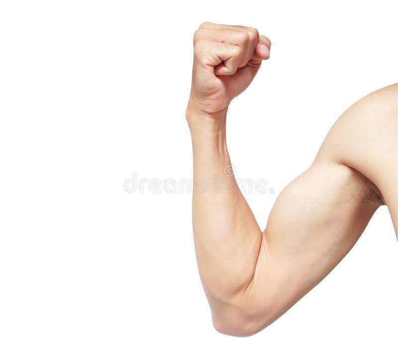Muscle d'homme de bras fort d'isolement sur le fond blanc avec la coupure photos libres de droits