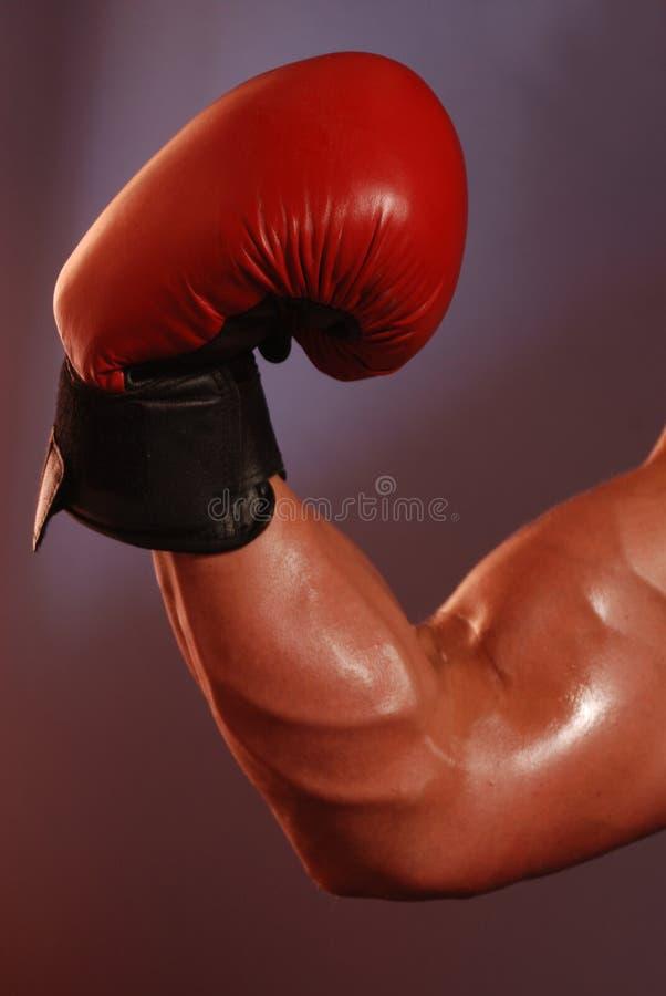 Muscle de boxe photos libres de droits