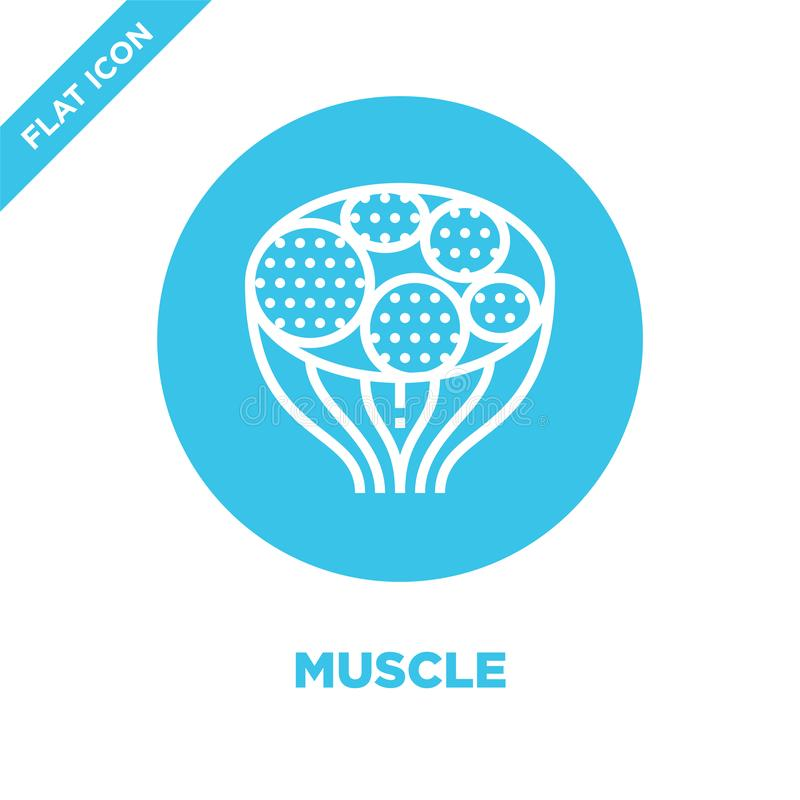 Muscle icon vector from human organs collection. Thin line muscle outline icon vector  illustration. Linear symbol for use on web. And mobile apps, logo, print royalty free illustration