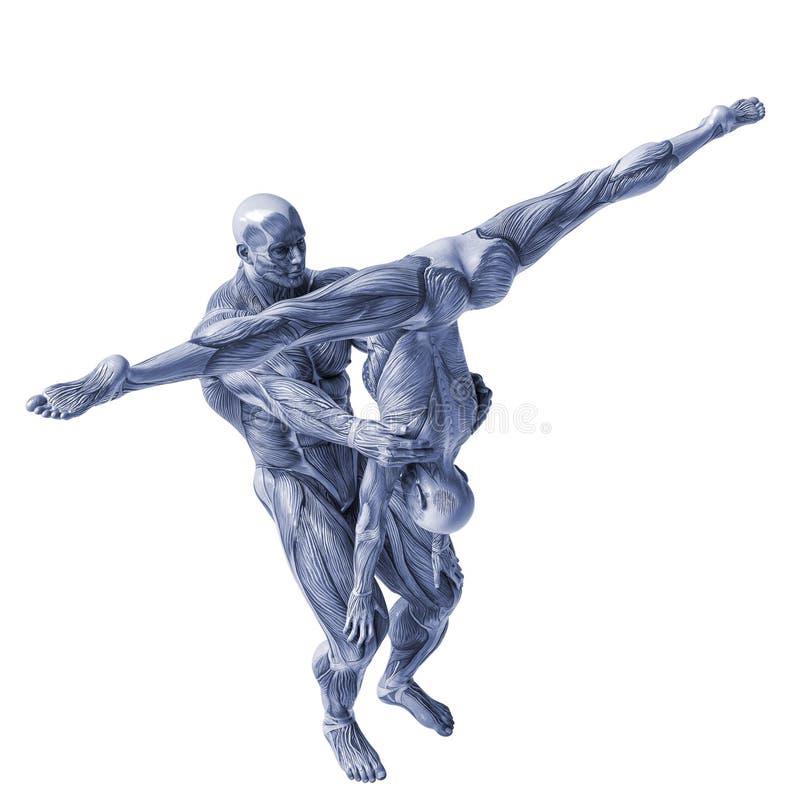 Muscle la anatom?a de la yoga del hombre y de la mujer de los pares en un fondo blanco ilustración del vector