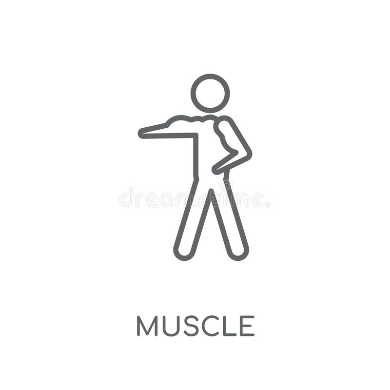 Muscle linear icon. Modern outline Muscle logo concept on white. Background from Sport collection. Suitable for use on web apps, mobile apps and print media vector illustration