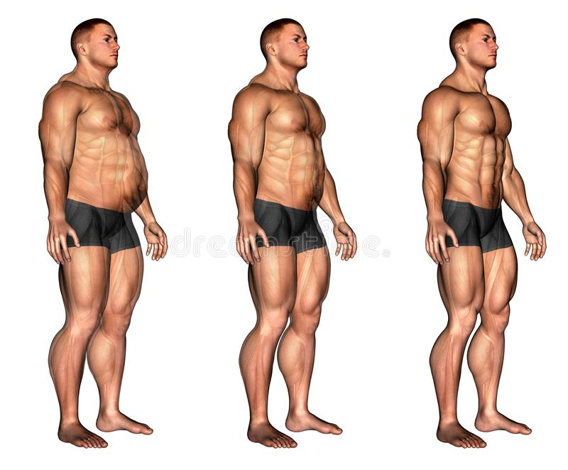 Muscle male form transformation royalty free stock images