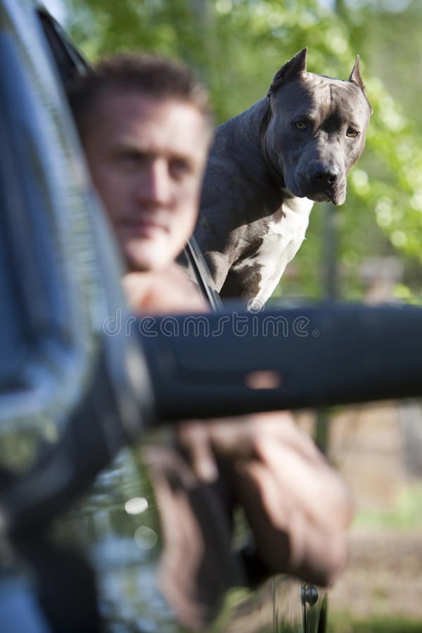 Muscle man with pit bull in truck stock image