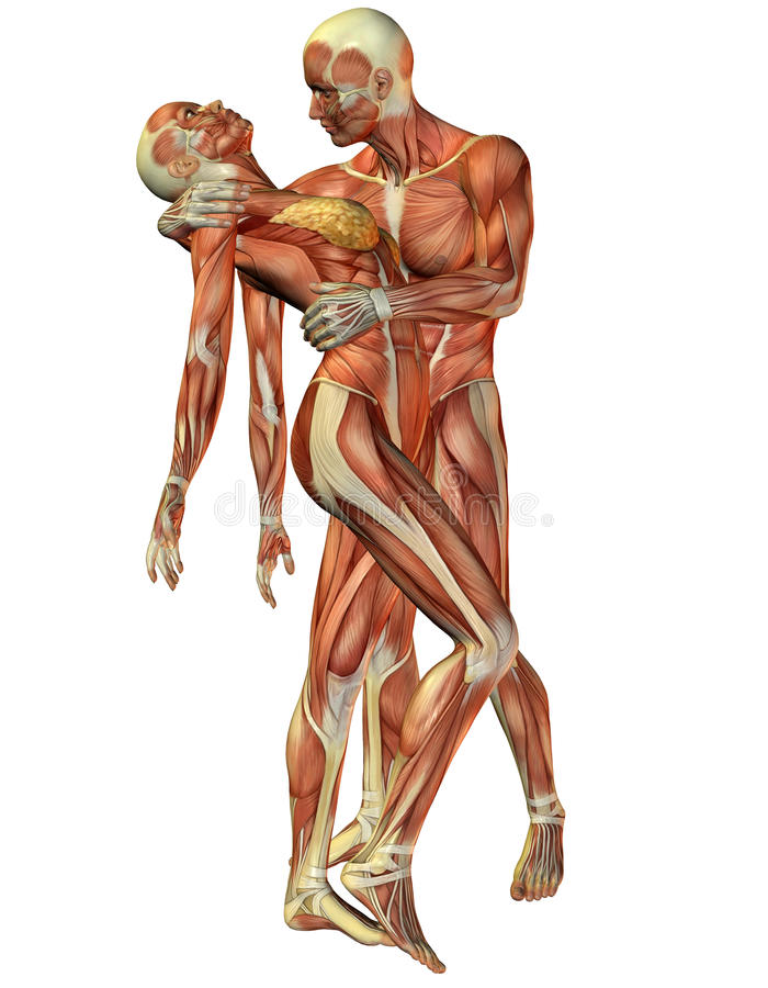 Download Muscle Woman And Man Standing Stock Illustration - Image: 17686320