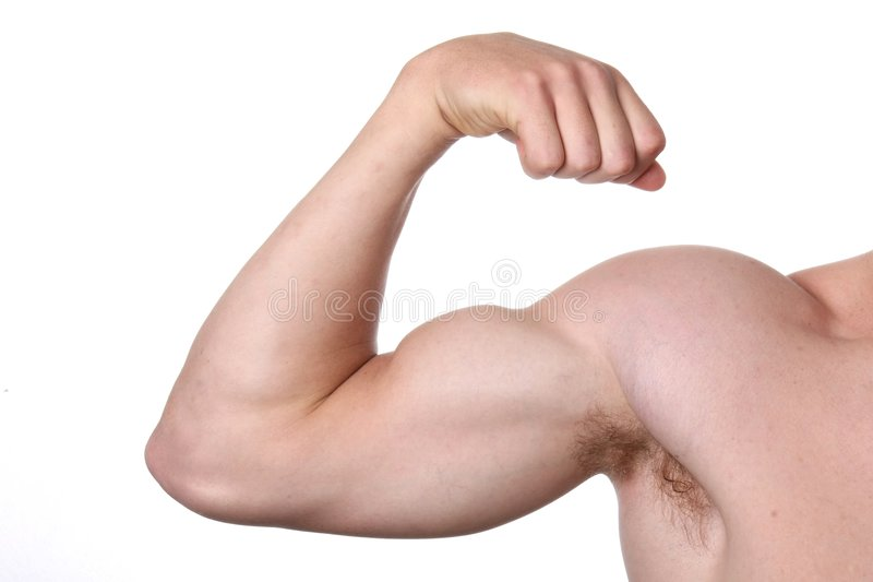 muscles de bras photo stock