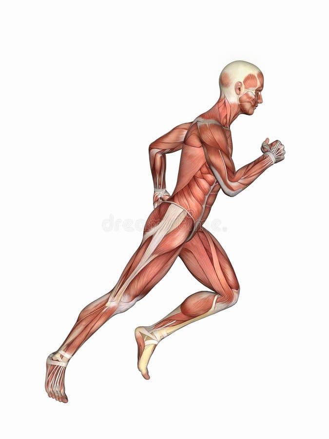 Muscles de mâle dans le mouvement courant illustration stock