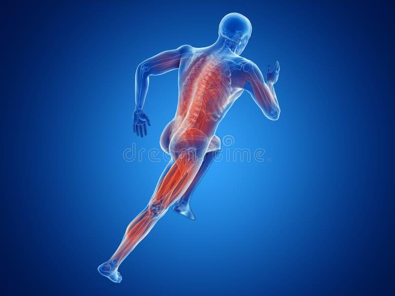 muscles de taqueurs illustration de vecteur