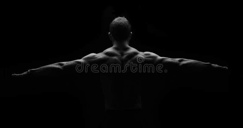 Muscles du dos dans la symétrie images stock