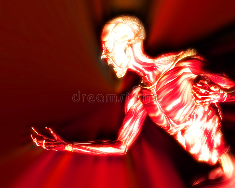 Download Muscles On Human Body 11 stock illustration. Image of healthcare - 2836025