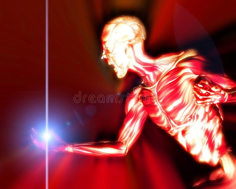 Muscles sur le fuselage humain 15 illustration de vecteur