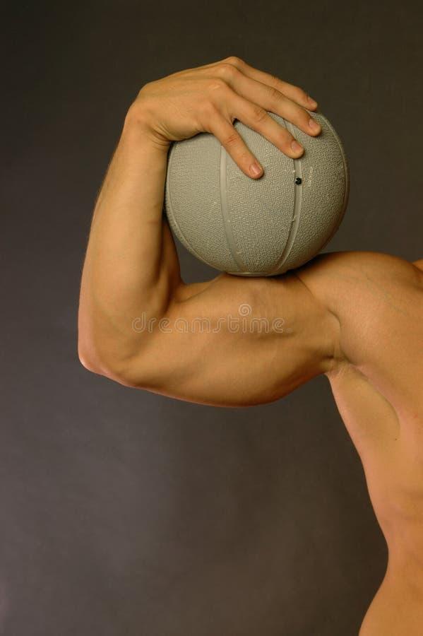 Muscolo fotografie stock libere da diritti