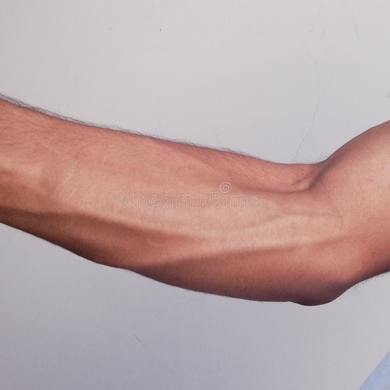 Muscolo anteriore del braccio fotografie stock