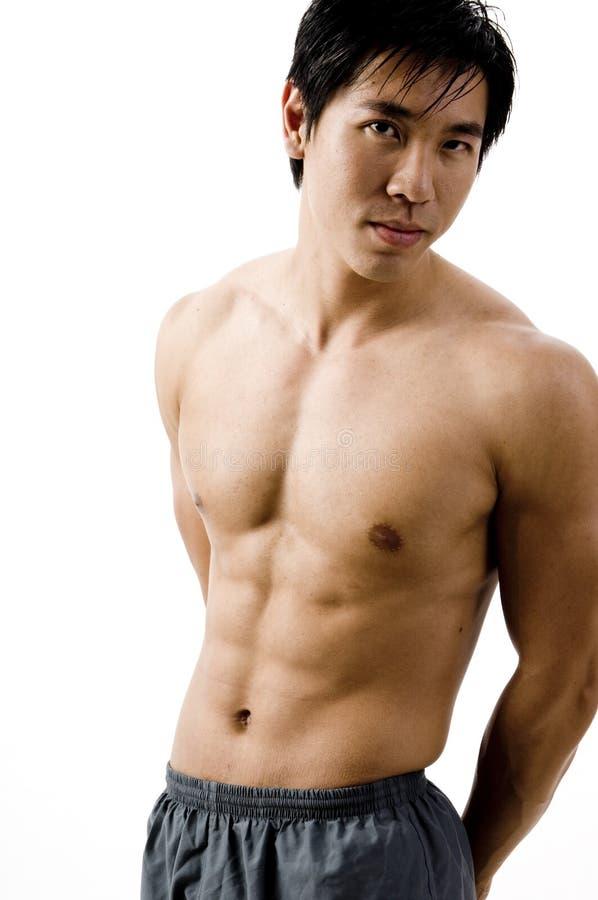 Muscular stock image