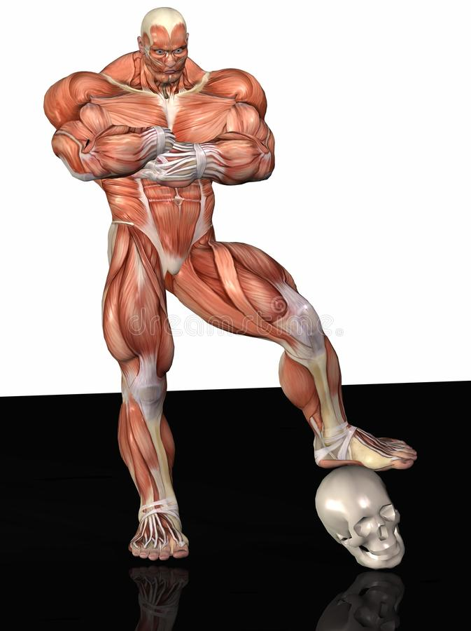Muscular Anatomical Man Stock Images