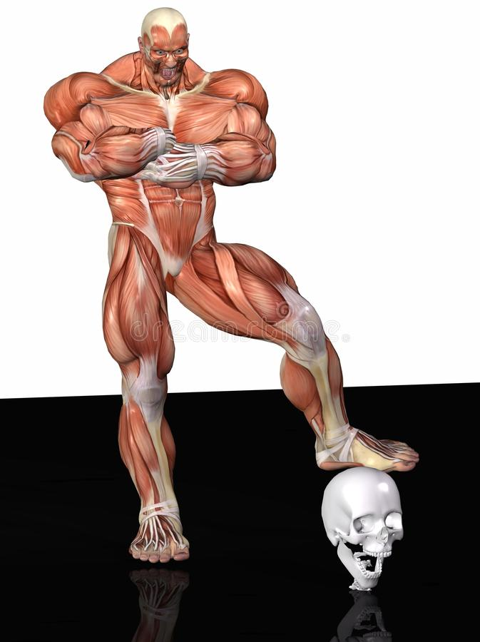 Download Muscular anatomical man stock illustration. Image of physique - 13244029