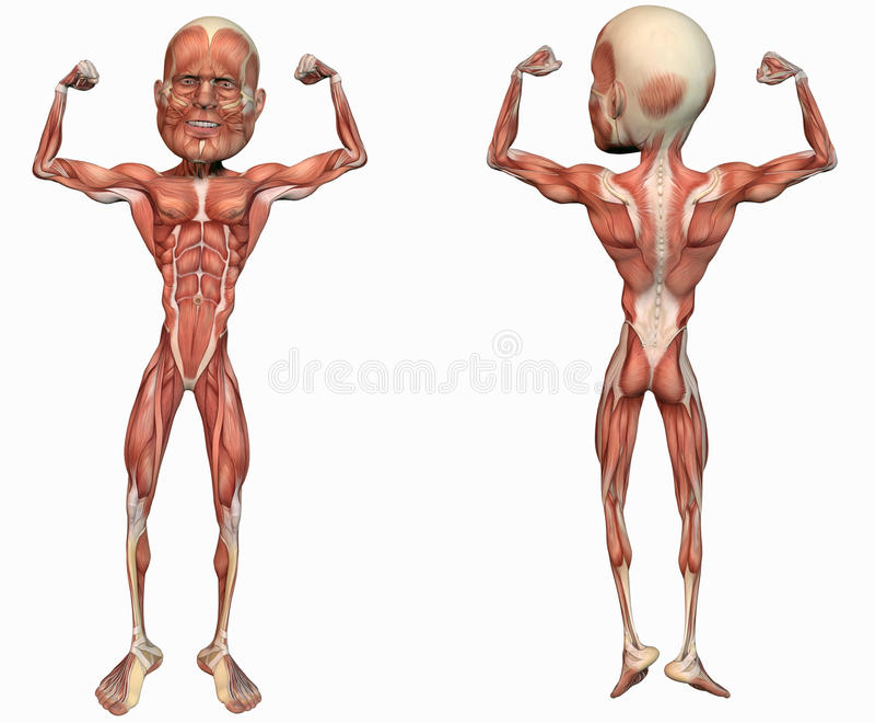 Download Muscular anatomical man stock illustration. Image of poses - 24938075