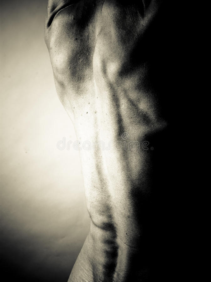 Muscular Back Royalty Free Stock Images