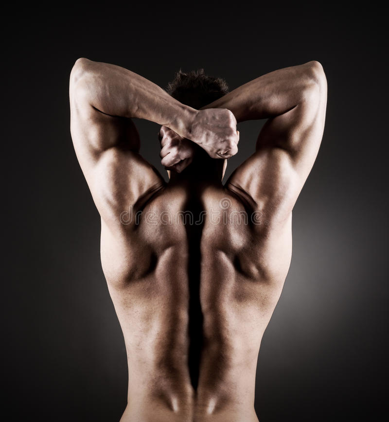 Download Muscular back stock photo. Image of torso, endurance - 39185182