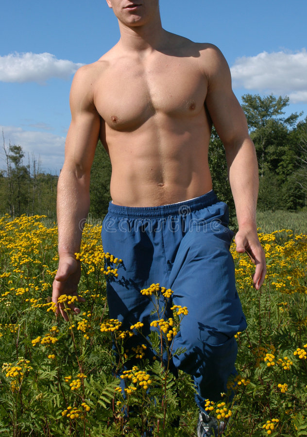 Download Muscular Male Torso stock image. Image of model, exercise - 461079