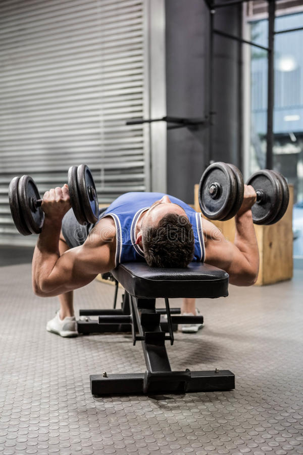 Muscular man on bench lifting dumbbells royalty free stock images