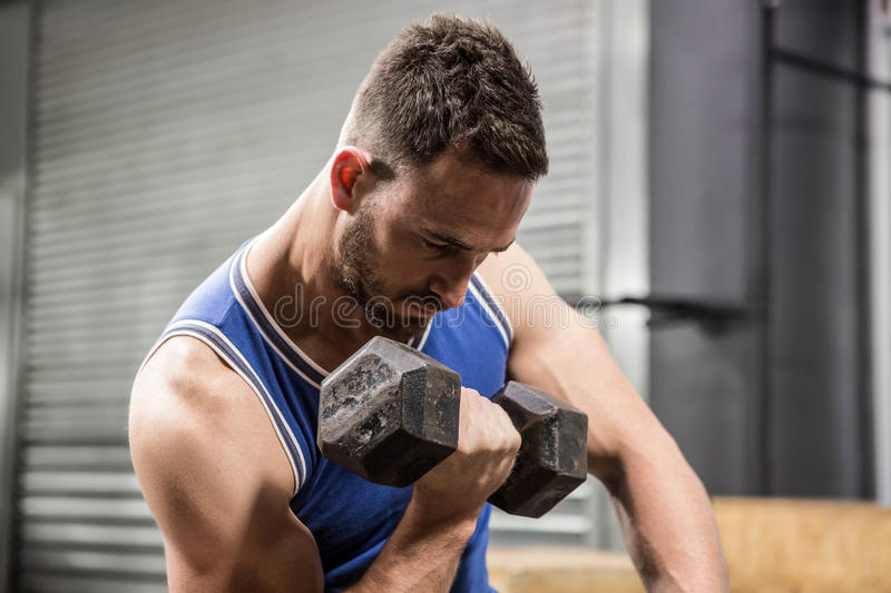 Muscular man sitting on bench lifting dumbbell royalty free stock image