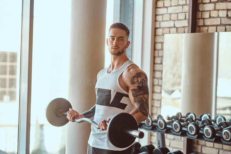 Muscular tattooed man is doing his exercises with barbell in gym near window royalty free stock photos
