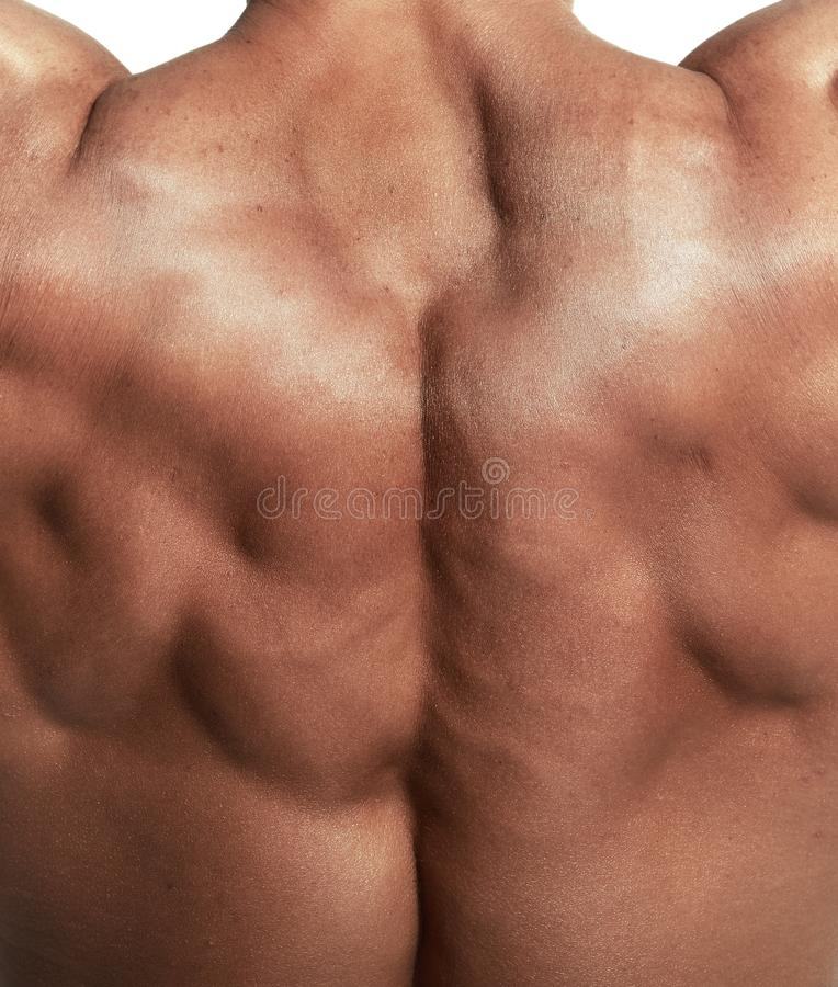 Muscular torso of bodybuilder royalty free stock photography