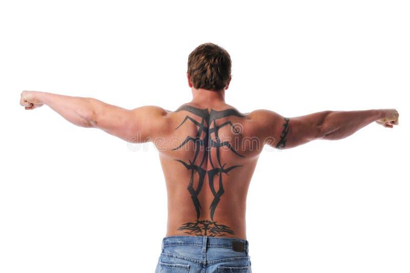 Muscular young man's torso royalty free stock image