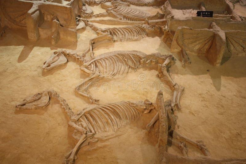 Museo arqueológico imagen de archivo libre de regalías