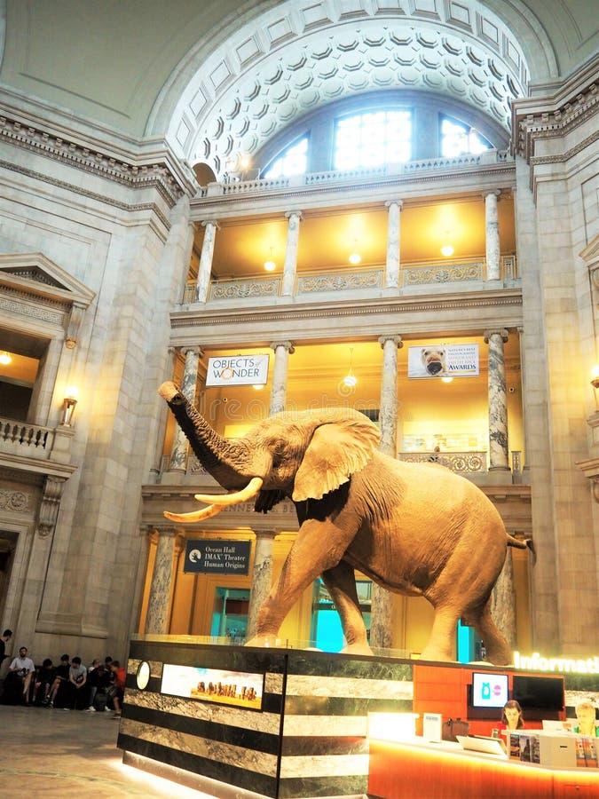 Museo in DC di Washington immagine stock libera da diritti