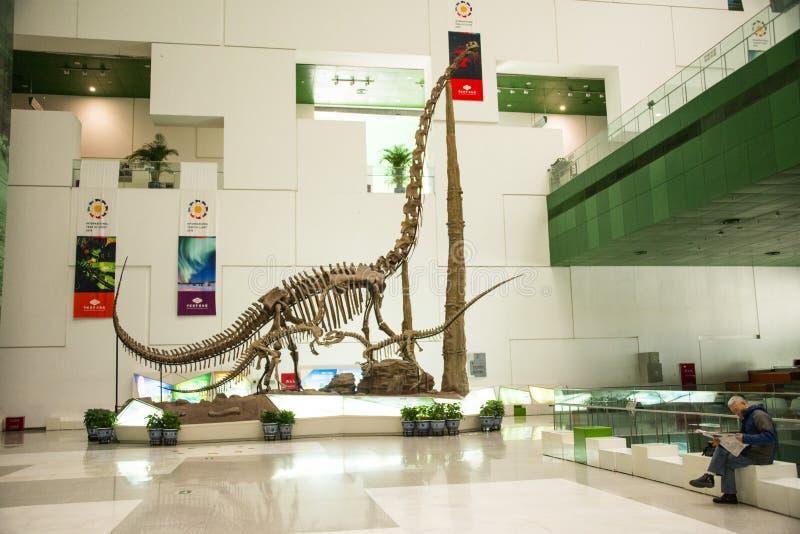 Museo de Asia China, de Pekín, de la ciencia y de la tecnología, esqueletos del dinosaurio imagenes de archivo