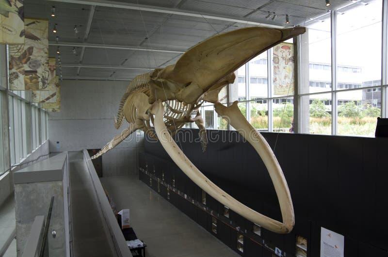 Museo de la biodiversidad de Beaty imagen de archivo