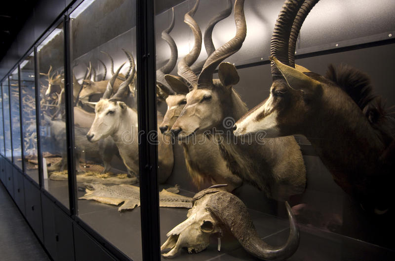 Museo de la biodiversidad de Beaty fotografía de archivo