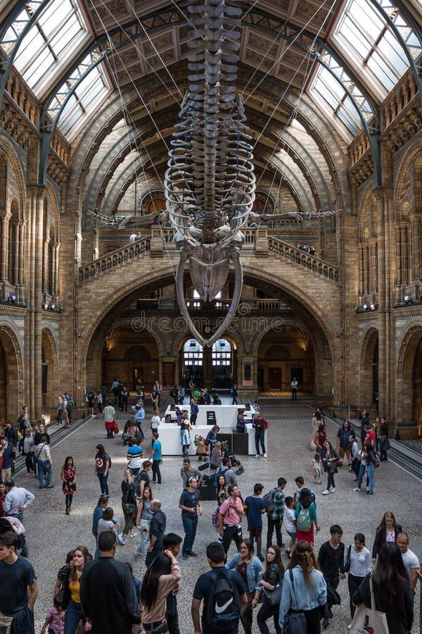 Museo de la historia natural en Londres imagen de archivo libre de regalías