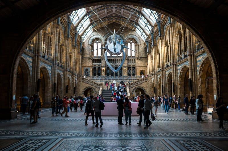 Museo de la historia natural en Londres fotos de archivo libres de regalías