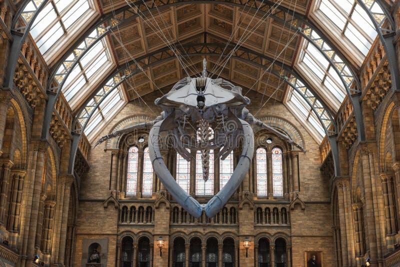 Museo de la historia natural - Londres imágenes de archivo libres de regalías
