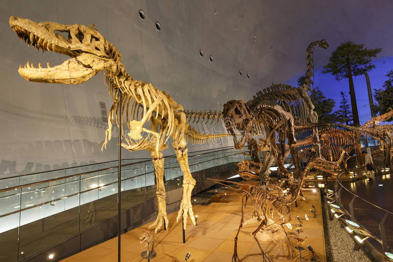Museo de la prefectura del dinosaurio de Fukui fotografía de archivo