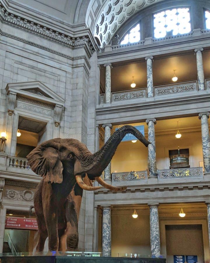 Museo de Smithsonian de la Rotonda principal de la historia natural fotos de archivo libres de regalías