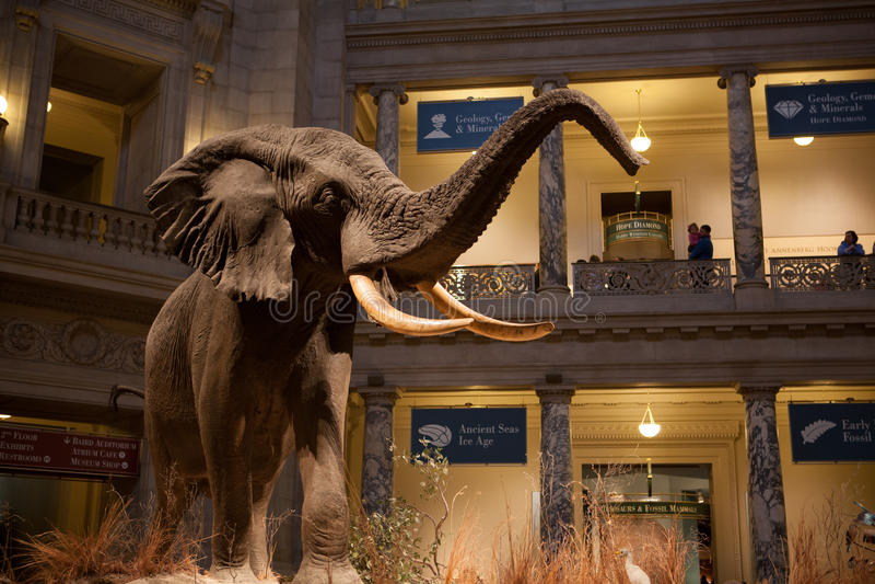 Museo di storia naturale di Smithsonian, CC immagine stock libera da diritti