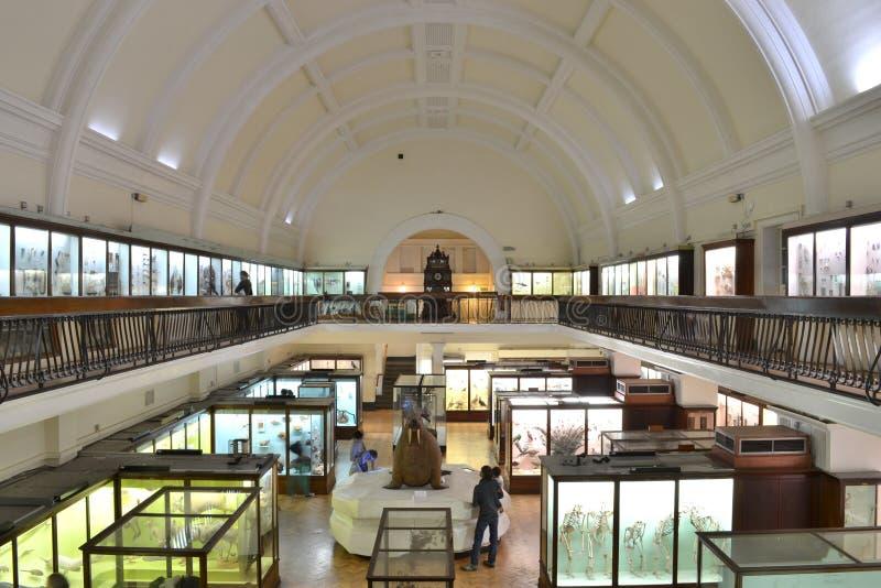 Museo Londres de Horniman fotografía de archivo libre de regalías